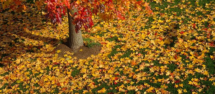 Autumn fertiliser treatment.