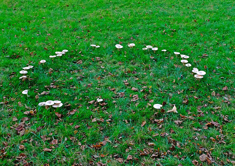 Fairy ring type 3.