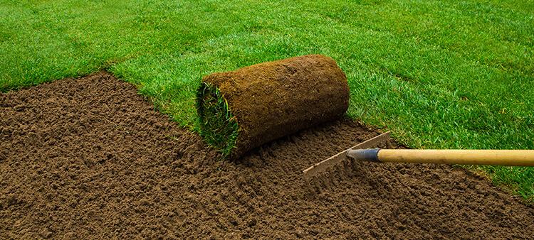 Seed vs turf.