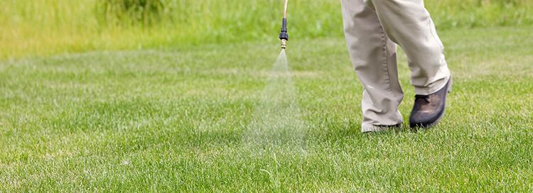 Summer liquid fertiliser.