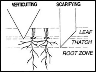 Verticutting vs scarifying.